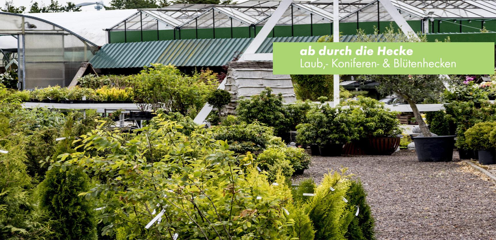 Baumschule Pflanzen und Gartencenter Hedden
