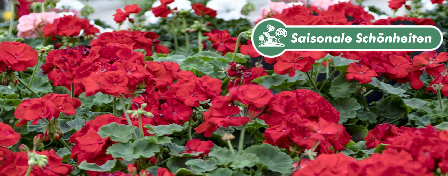 Beet Balkon Pflanzen Und Gartencenter Hedden
