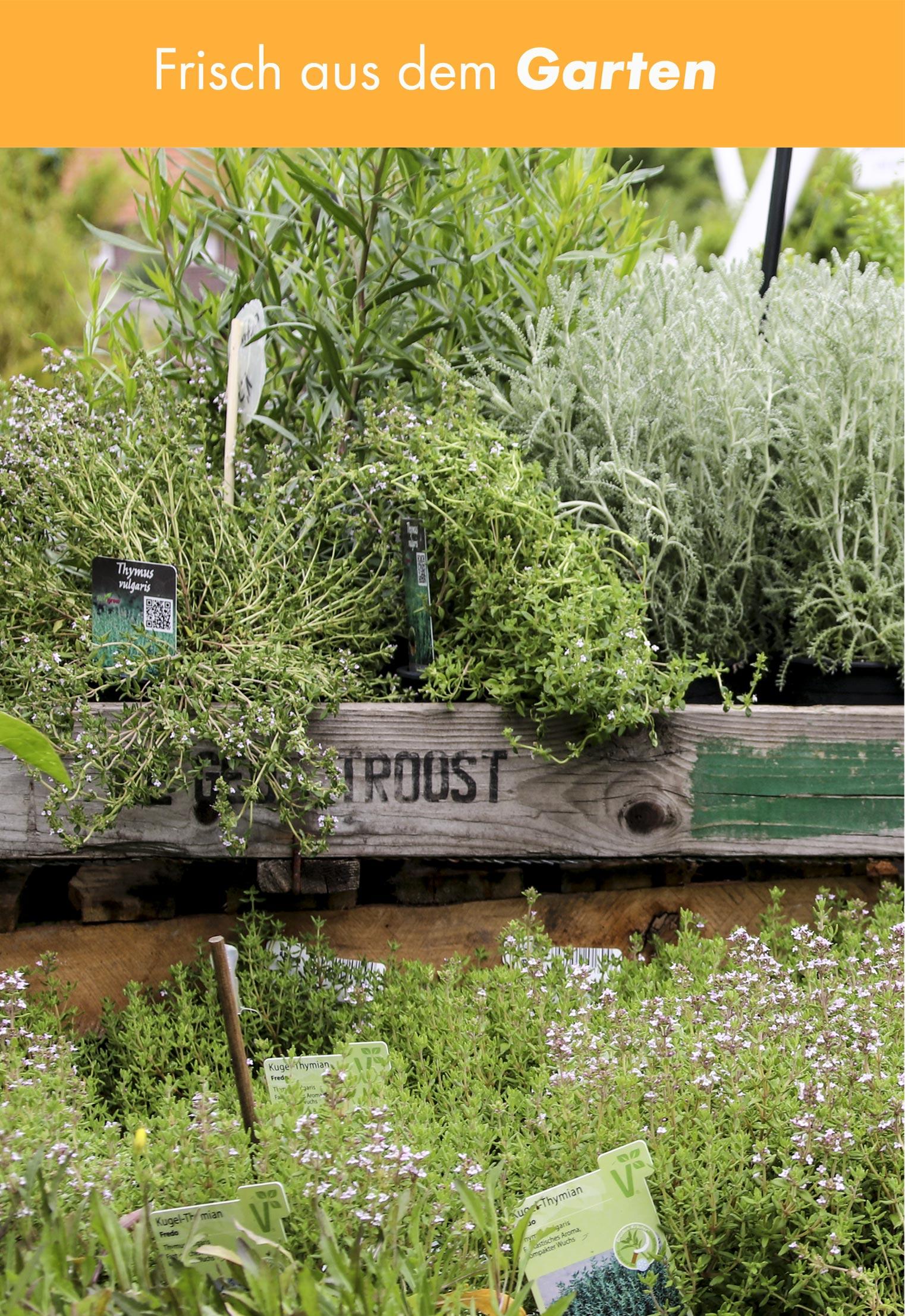 kr uter gem se f r k che und garten im pflanzen und gartencenter hedden. Black Bedroom Furniture Sets. Home Design Ideas