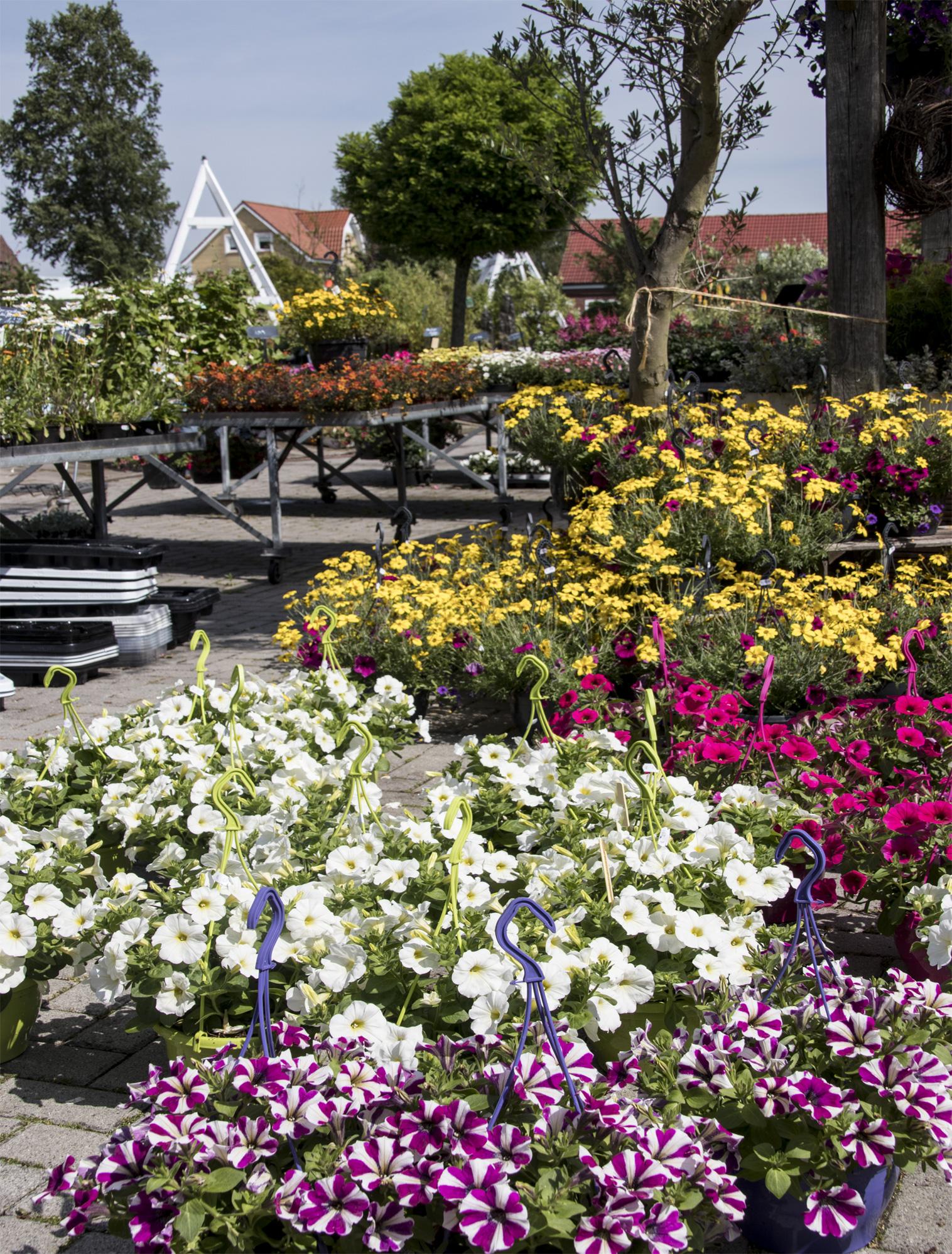 Elegant Pflanzen Im Garten Schema